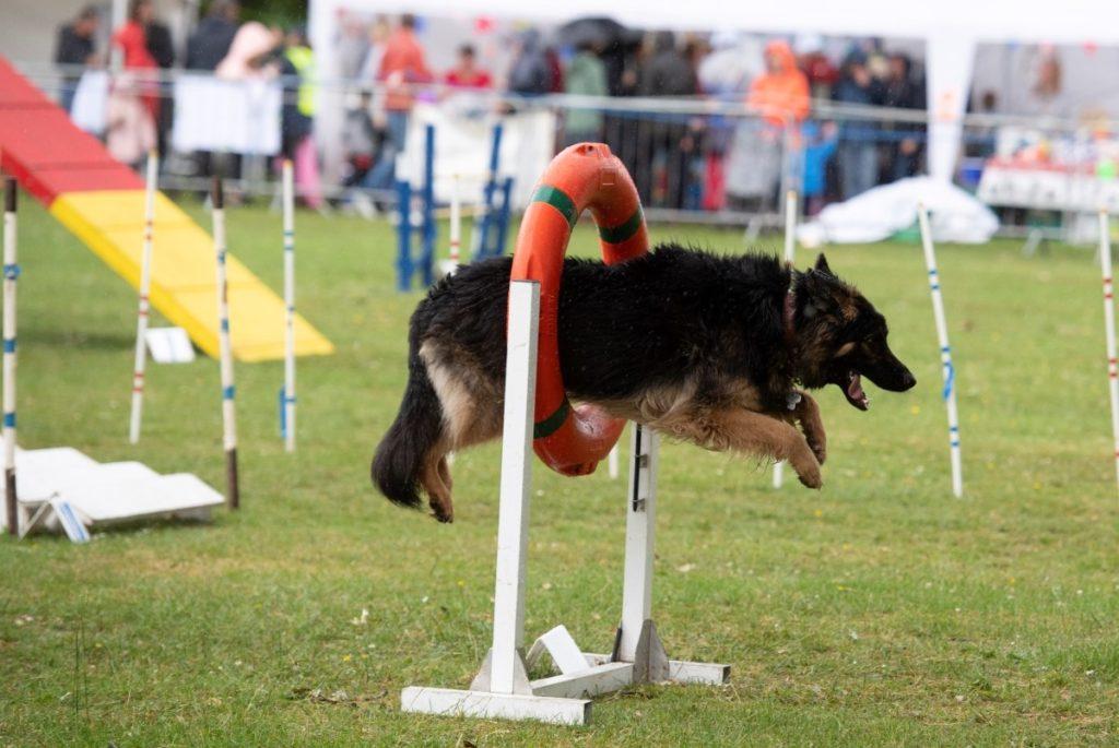Leyland Festival Pets