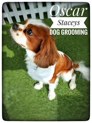 Stacey's Dog Grooming Leyland